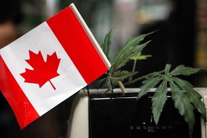 Καναδάς: Άλλη μια χώρα που νομιμοποιεί την κάνναβη