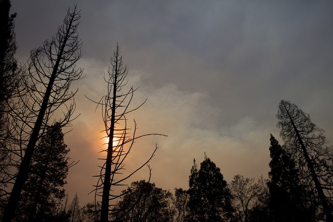 epa07160091 Burned through trees in the Paradise area after the Camp Fire burned through the region, fueled by high winds in Butte County, California, USA, 11 November 2018. The nearby communities of Pulga, Paradise and Concow, have been ordered to evacuate the area.  EPA/PETER DASILVA