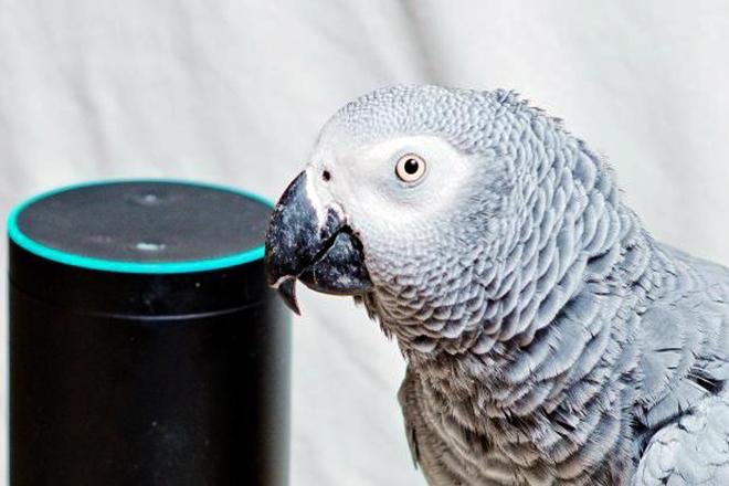 Απίστευτο κι όμως αληθινό: Παπαγάλος ερωτεύτηκε την Alexa και άρχισε τις online παραγγελίες λιχουδιών