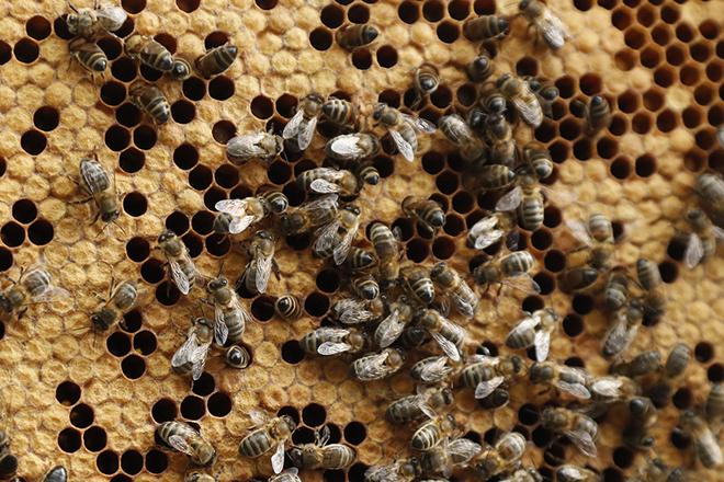 Το μέλλον των drones ίσως περνάει μέσα από τις …μέλισσες