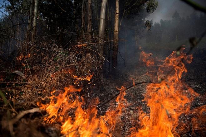 Φωτιά στο Νέο Βουτζά κοντά στο Λύρειο Ίδρυμα