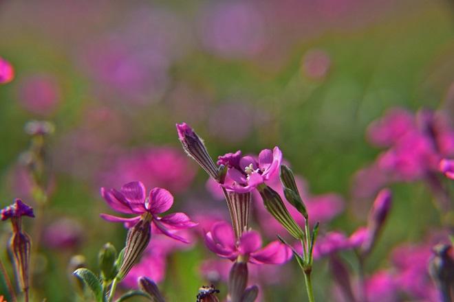 Ανθισμένα λουλούδια σε τοποθεσία στην πόλη του Ναυπλίου, Δευτέρα 4 Απριλίου 2016. Ηλιοφάνεια με τοπικές νεφώσεις σε ολόκληρη την Αργολίδα , με την θερμοκρασία να κυμανθεί από 10 έως 26 βαθμούς Κελσίου. ΑΠΕ-ΜΠΕ/ΑΠΕ-ΜΠΕ/ΜΠΟΥΓΙΩΤΗΣ ΕΥΑΓΓΕΛΟΣ