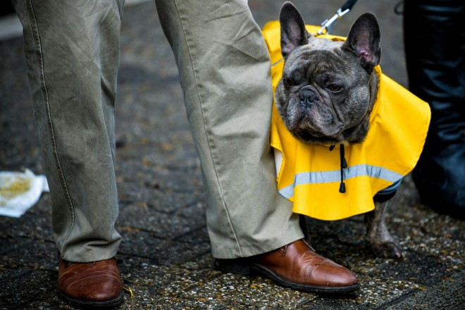 epaselect epa07412961 A dog with a yellow rain cape during the annual Rose Monday parade in Duesseldorf, Germany, 04 March 2019. Rose Monday is the traditional highlight of the carnival season in many German cities.  EPA/KIRSTEN NEUMANN