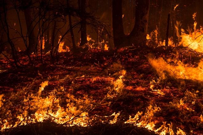 Φλέγεται ο Αμαζόνιος: Παγκόσμιος συναγερμός για την περιβαλλοντική καταστροφή (Φωτογραφίες και Βίντεο)
