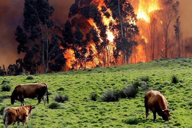 Καταστροφικές πυρκαγιές σαρώνουν τα βόρεια της Ισπανίας (Φωτογραφίες)