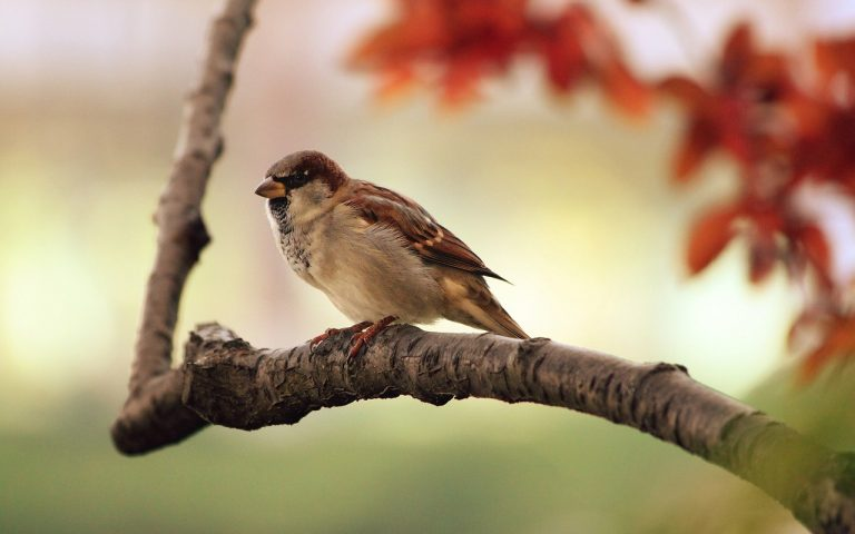 Ρώσοι επιστήμονες βρήκαν ότι τα αποδημητικά πτηνά έχουν ένα πρόσθετο χρωμόσωμα