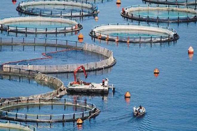 ΑΒ Βασιλόπουλος, WWF Ελλάς και ΝΗΡΕΥΣ ενώνονται με σκοπό την υπεύθυνη υδατοκαλλιέργεια