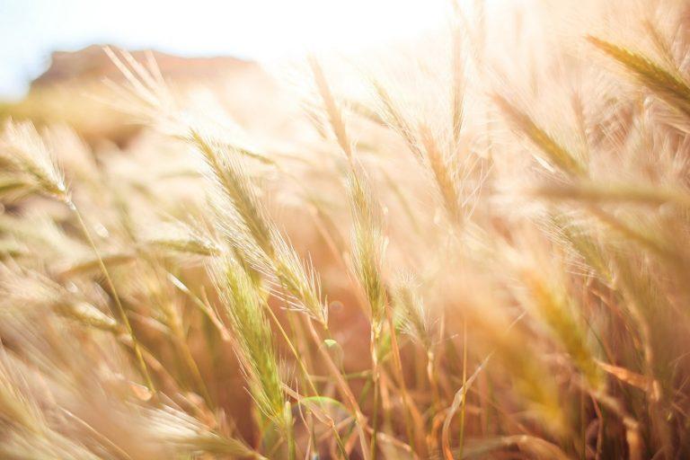 «TROPHY- ΤΡΟΦΗ CHALLENGE»: Διαγωνισμός για καινοτόμες ιδέες και επιχειρήσεις στην αγροτεχνολογία
