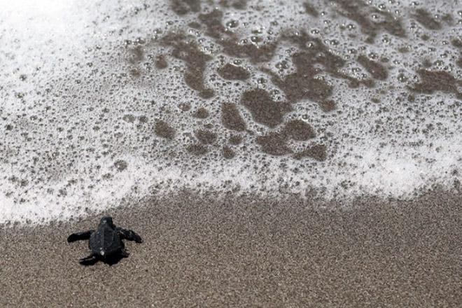 Αν δεν μειωθούν οι εκπομπές CO2 θα χαθεί το 17% των θαλάσσιων ζώων μέχρι το 2100