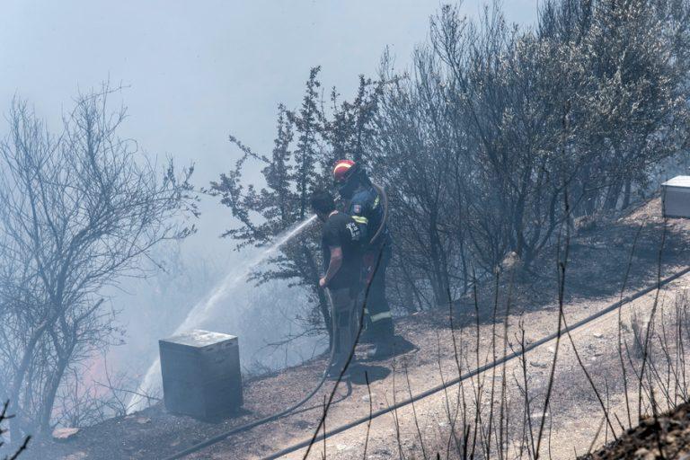Μάχη με τις φλόγες στην Εύβοια – Αίτημα να κηρυχθούν περιοχές σε κατάσταση έκτακτης ανάγκης