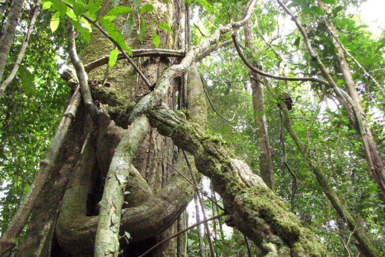 Το δάσος του Αμαζονίου εκπέμπει SOS από την ασταμάτητη αποψίλωση