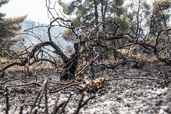 Ανοιχτά όλα τα ενδεχόμενα για τα αίτια της μεγάλης πυρκαγιάς στην Εύβοια σύμφωνα με την Πυροσβεστική