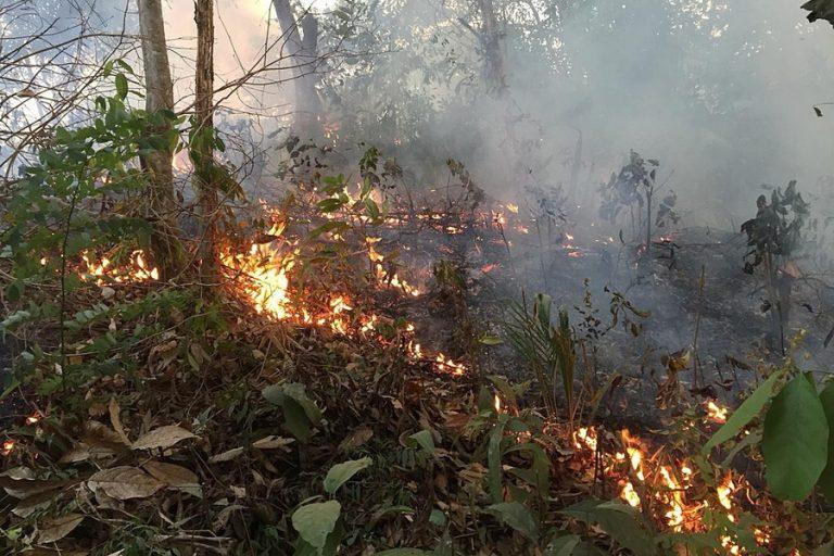 Ενεργοποίηση των κρατικών αρχών στη Βραζιλία για τις πυρκαγιές στον Αμαζόνιο