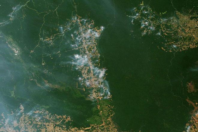 Ποιοι και πώς επωφελούνται από την καταστροφή του Αμαζονίου;