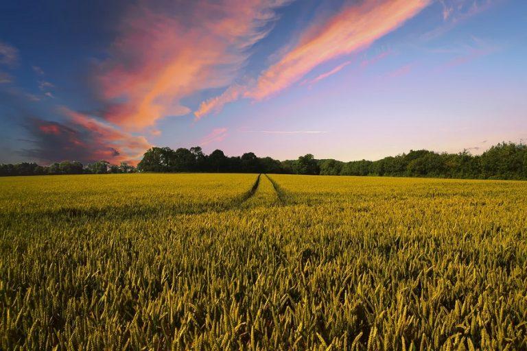 Η τεχνητή νοημοσύνη μπορεί να συμβάλλει στην επόμενη γεωργική επανάσταση