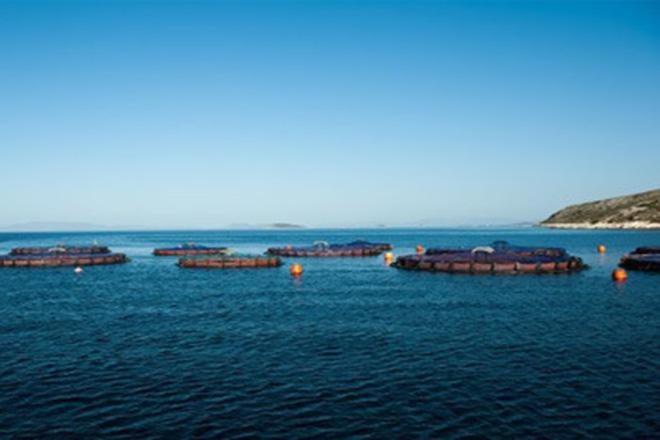 Εγκρίθηκε από την Κομισιόν η εξαγορά του Νηρέα και της Σελόντα από τον Όμιλο Andromeda Seafood