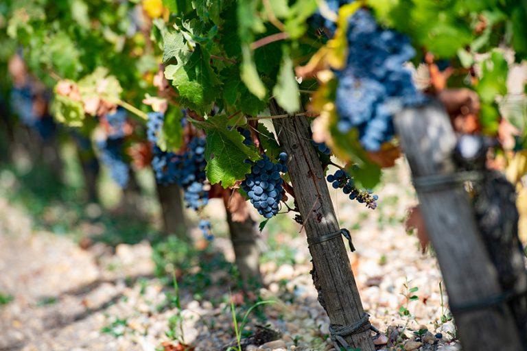 Σε αναβρασμό οι Γάλλοι «βαρόνοι» του κρασιού μετά τους νέους αμερικανικούς δασμούς