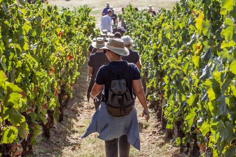 Grape Escape: Ο νέος «προορισμός» για τους λάτρεις του Ελληνικού κρασιού