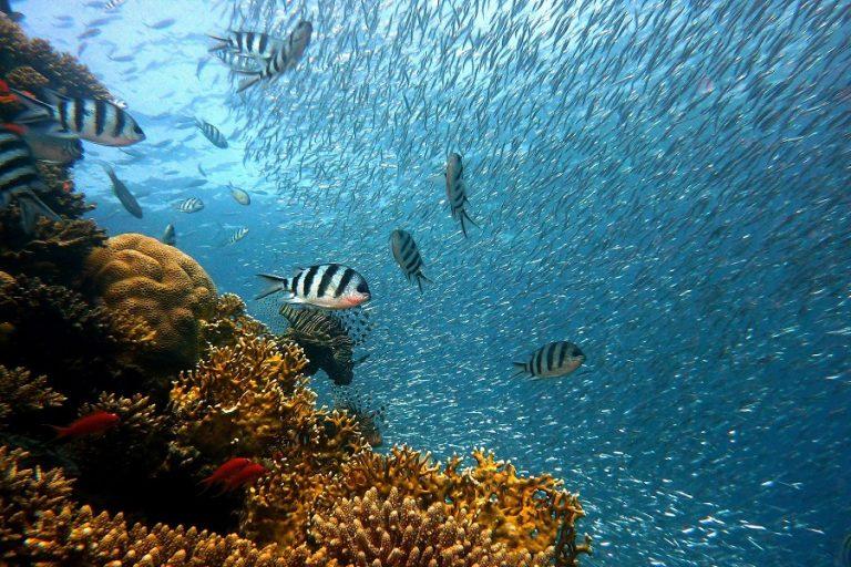 Πώς πολυτελή πλωτά σπίτια βοηθούν στην αναγέννηση κοραλλιογενών υφάλων στο Ντουμπάι (Βίντεο)