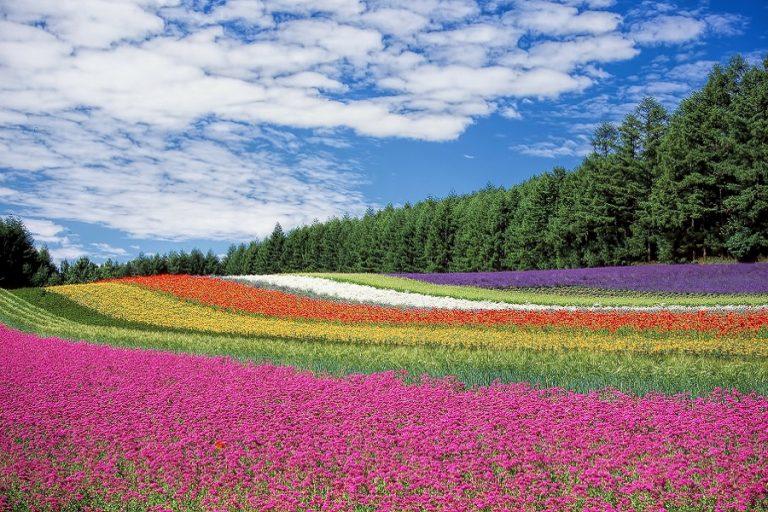 Μουσεία σε όλο τον κόσμο ανταλλάσσουν λουλούδια μέσω social media σε μία προσπάθεια διάδοσης της χαράς