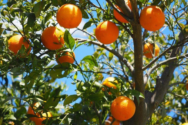 O κορωνοϊός εκτινάσσει στα ύψη τις ελληνικές εξαγωγές οπωροκηπευτικών