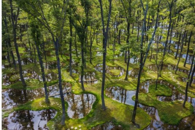 Βραβείο για το αρχιτεκτονικό «Water Garden» του Junya Ishigami