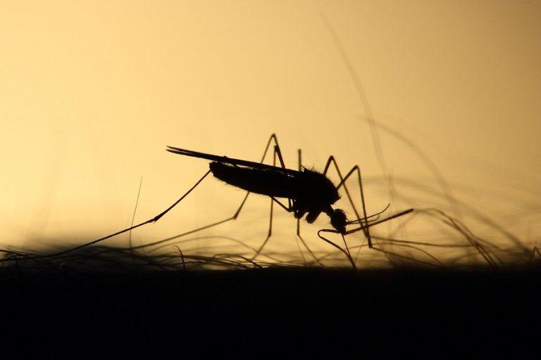 ΕΟΔΥ: Όλα τα μέτρα προφύλαξης από τα κουνούπια- Πώς να τα αποφύγουμε στο σπίτι και στην εργασία