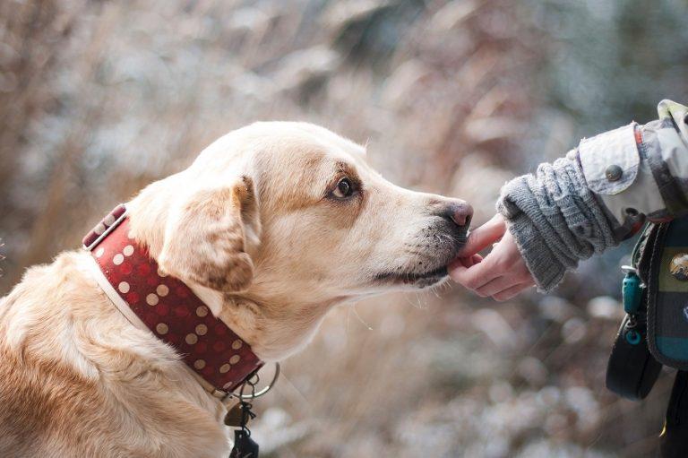 Κ. Μπακογιάννης: Δωρεάν microchip στα κατοικίδια δημοτών- Φροντίζουμε τα δεσποζόμενα και τα αδέσποτα ζώα της πόλης