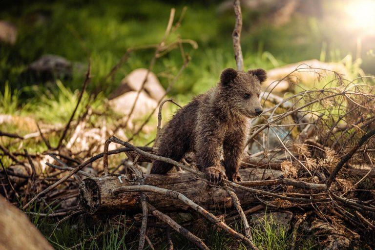 «G.A.I.A»: Ένα φωτογραφικό άλμπουμ-ύμνος στην προστασία της άγριας ζωής
