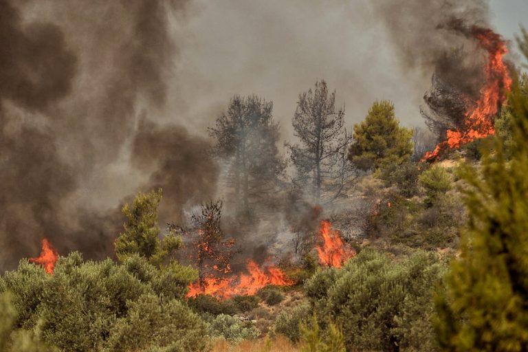 «Συναγερμός» στην Ηλεία – Μεγάλη κινητοποίηση της Πυροσβεστικής για την πυρκαγιά