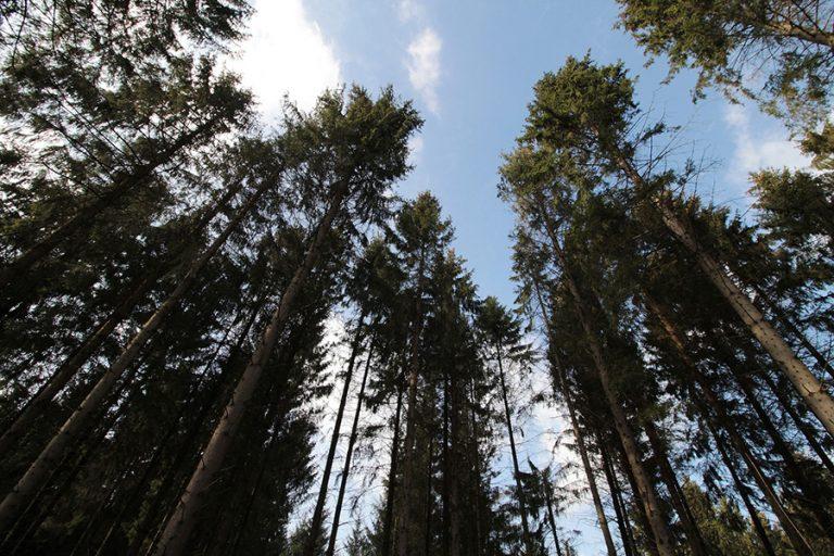 Τα δύο τρίτα των τροπικών δασών έχουν καταστραφεί ή υποβαθμισθεί