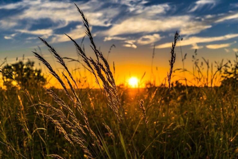 διαΝΕΟσις: Πώς θα διαμορφωθεί η εικόνα της ελληνικής γεωργίας και αγροδιατροφής μετά την πανδημία