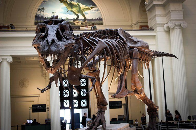 Ένας δεινόσαυρος δημοπρατείται στη Νέα Υόρκη από τον οίκο Christie' s