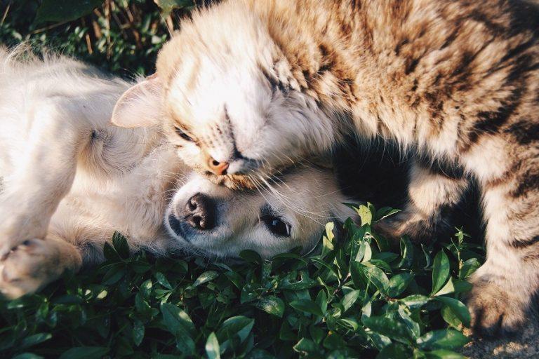 Παγκόσμια Ημέρα Ζώων: Η ζωή των αδέσποτων στην εποχή του κορωνοϊού