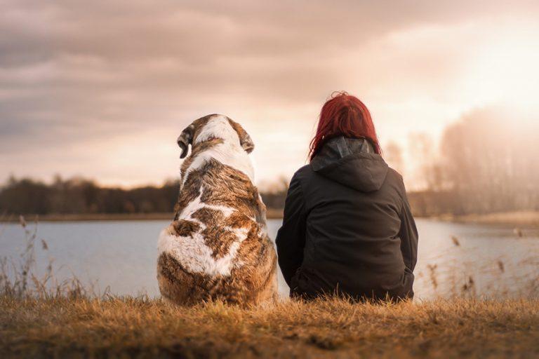 Γερμανική έρευνα απαντά: Εκτρεφόμενα ζώα και κατοικίδια δεν μεταδίδουν στον άνθρωπο κορωνοϊό
