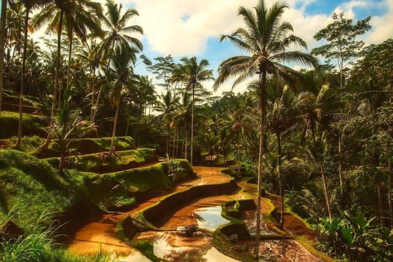 Ένα ασυνήθιστο σύμπλεγμα σπιτιών στη ζούγκλα του Μπαλί (Φωτογραφίες)
