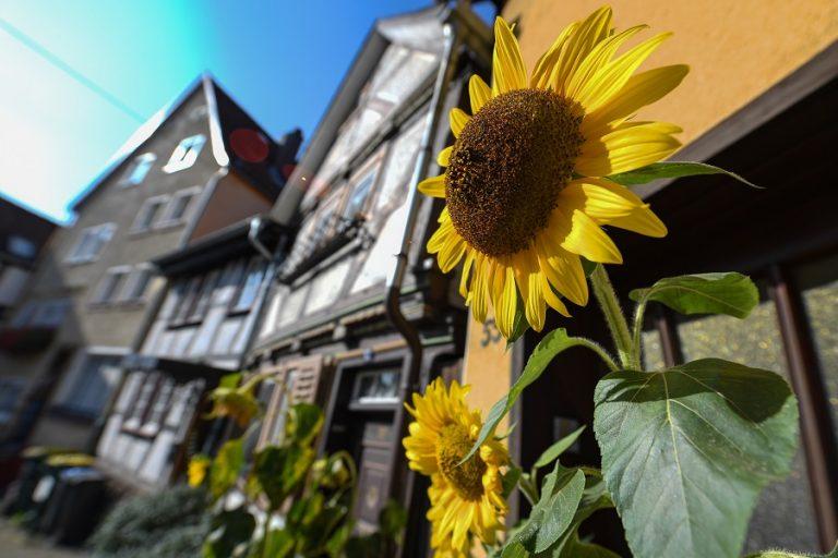 Σπίτι-ηλιοτρόπιο: Η οικολογική κατοικία του μέλλοντος είναι εδώ- Από τι αποτελείται
