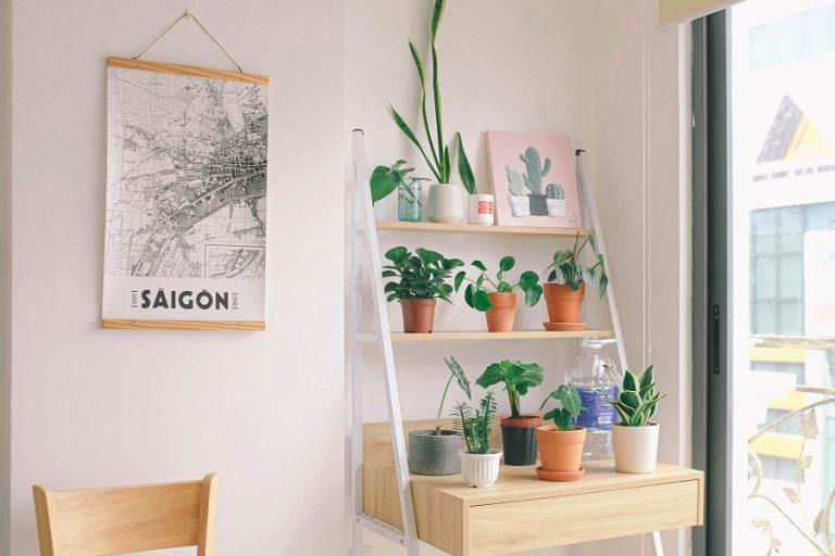 Έρευνα: Τα φυτά στο σπίτι βελτιώνουν την ψυχική κατάσταση των ανθρώπων στη διάρκεια του lockdown