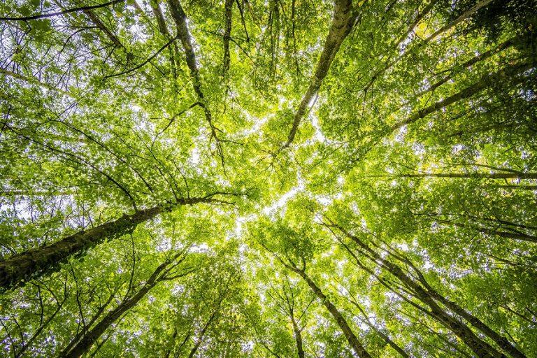 Μόλις το 19% της Γης παραμένει σήμερα άθικτο από τους ανθρώπους