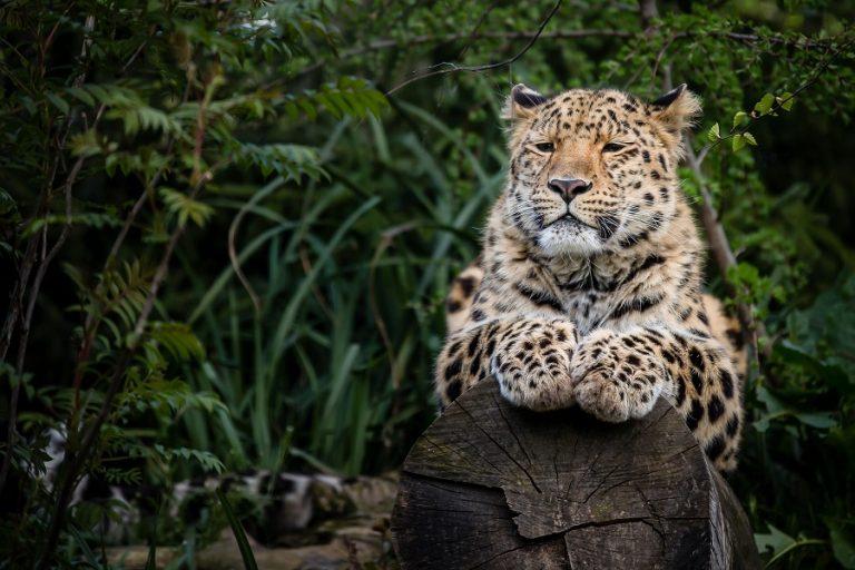 Δέκα είδη ζώων που απειλούνται με εξαφάνιση