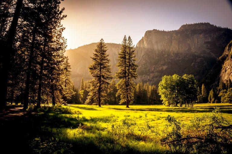 Οι θόρυβοι της ανθρώπινης δραστηριότητας νέος εχθρός των δασών