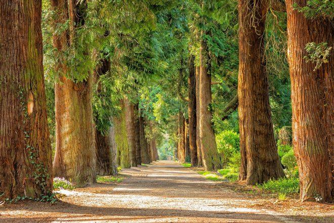 Τρεις λόγοι για τους οποίους οι εταιρείες επενδύουν στη διατήρηση και αποκατάσταση των δασών