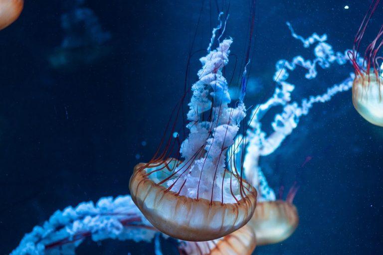 Επιστήμονες επισημαίνουν την «κατάρρευση» της βιοποικιλότητας της Μεσογείου μέσα σε 30 χρόνια