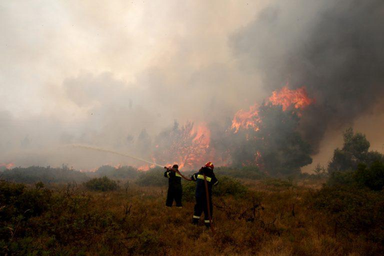Αστεροσκοπείο Αθηνών: 465.820 στρέμματα η συνολική καμένη έκταση στη Β. Εύβοια- Δάση τα 192.700