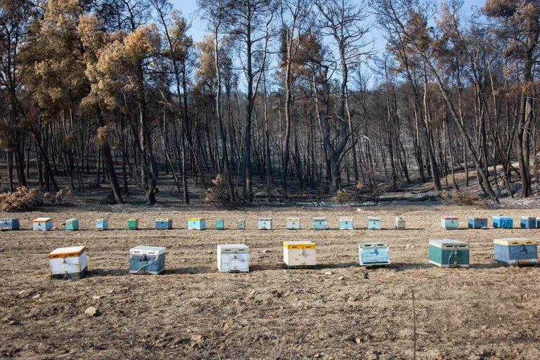 Fortune ρεπορτάζ: Θα χρειαστούν 30 χρόνια για να συνέλθει η μελισσοκομία στην Ελλάδα